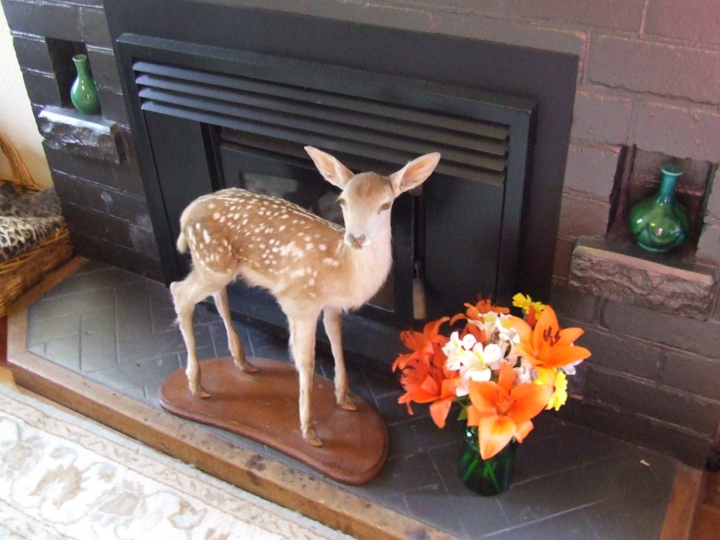 If you put flowers next to the taxidermy, it's less evil