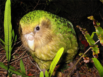Style chartreuse as Sirocco the kakapo parrot does: with neutrals like black, grey, beige.