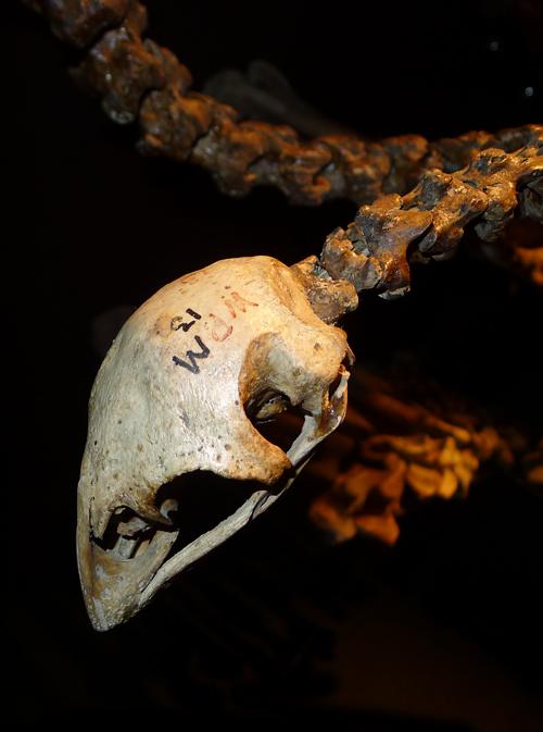 Moalab-skull